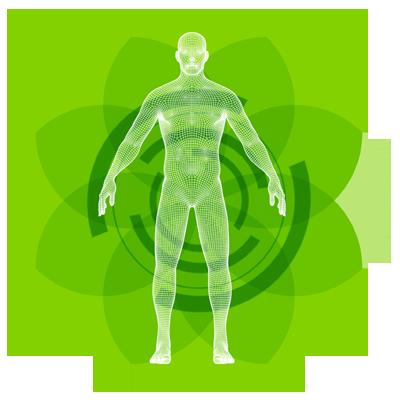 Liquid Clorophyll -verde in interior curat in interior